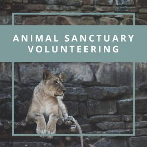 Animal Sanctuary Volunteering